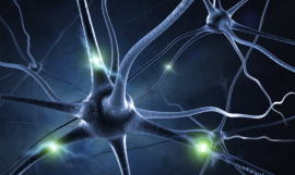 Sashkinw_Neurons_iStock