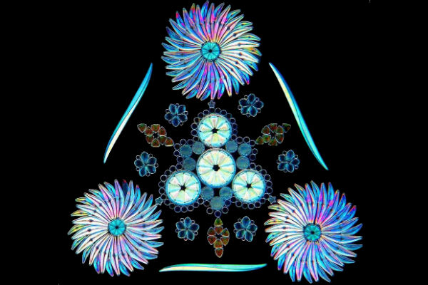 Gallery: The otherworldly beauty of microscopic organisms