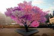 This tree produces 40 different types of fruit