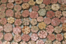 Japan's cherry blossom stone is a natural wonder
