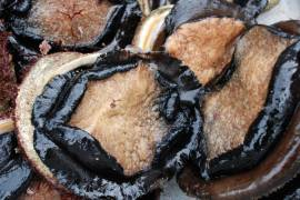 Abalone blood can fight cold sores and herpes, Australian scientists discover